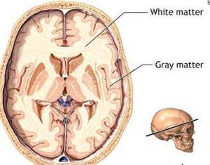 brain matter